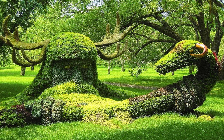 в мире растений фото