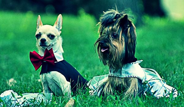 Собачий брак