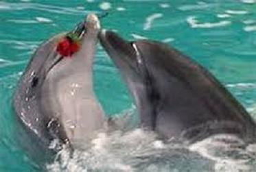 дельфинье танго...