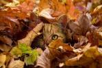 Я осень- эту кошку рыжую люблю