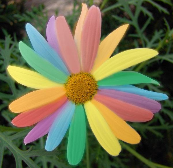 Городская, цветик семицветик цветы по оптовым