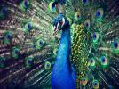 Фотоальбом «3.3. Синий / Голубой»