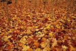 Фотоальбом «in  autumn »