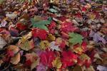 Фотоальбом «Autumn»