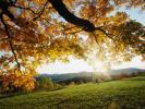 Фотоальбом «A.Leaves»