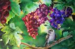 В зарослях виноградника