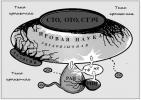 Медуза Тьмы