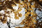 Фотоальбом «Осень»