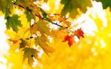 Осенний календарь