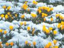 Нана.Ранняя весна.