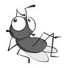 Camar-Fly-1