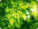 листва