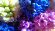 Цветы... из отчего  дома...