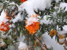 плен зимы...