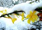 зиме так хочется цветов...