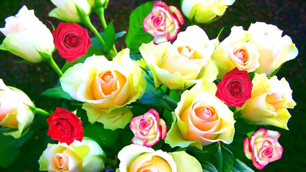 Каталог комнатных цветов только фото и название
