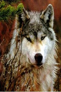 Пусть Волк преведёт тебя к успеху!