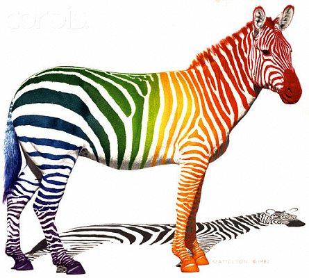 Правильная зебра
