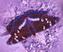 Бабочка Подарок от автора Саша