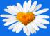 Велентинка февронькорвая универсальная (RUS/EURO) Подарок от автора Денис