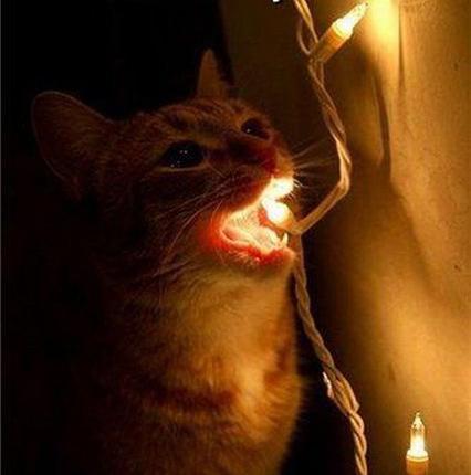 Светить всегда, светить везде!