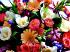 Цветы Подарок от автора Свой