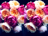 Букет цветов Подарок от автора Раиса Алейникова