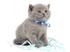 Котёнок Подарок от автора Ирина Луцкая
