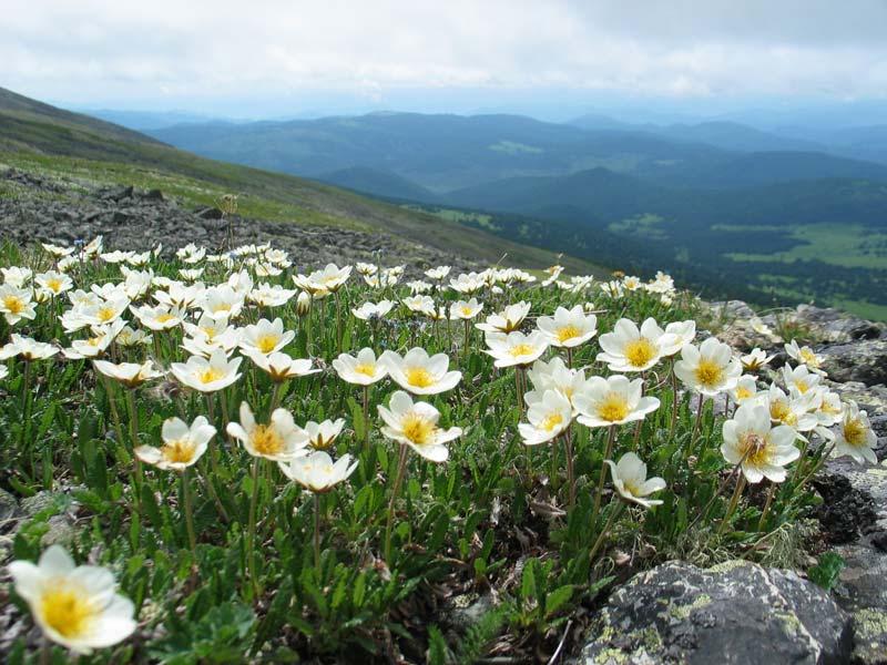 Невесты, цветы на севере россии