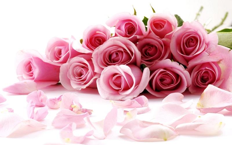 Розы - для Вас!:-)