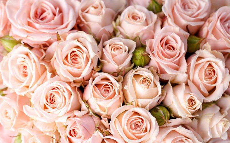 Африканские розы