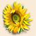 Солнечный цветок Подарок от автора Елизавета Носкова