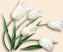 Flowers Подарок от автора Евгения Каргополова