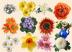 Море цветов Подарок от автора olga safarova