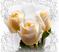 Розы Подарок от автора КОТктейль