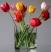 Тюльпаны Подарок от автора Света Харина