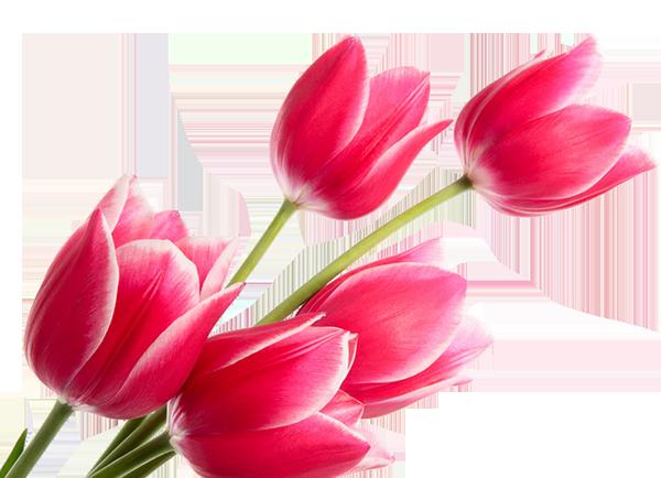Тюльпаны в благодарность