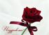 8 марта Подарок от автора Елизавета Носкова