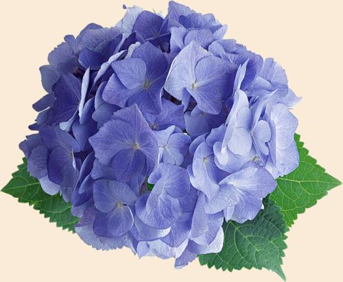 Клубочек синевы