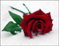 Роза Подарок от автора Саша