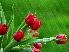 Тюльпаны Подарок от автора Роман Дих